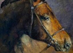 Profil brązowego konia