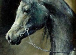 Profil szarego konia